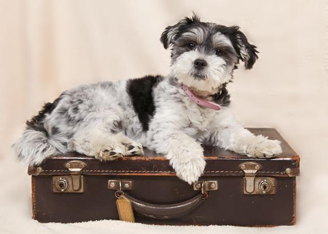 Perro-encima-de-una-maleta